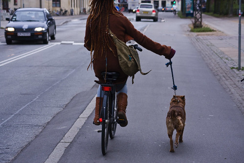 Walking the Copendog