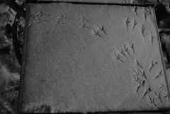 (Victoria Smith Photography) Tags: snow cute footprints