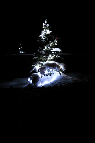 21.32 - Lighted tree