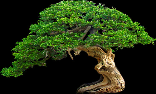 """Bonsai048 • <a style=""""font-size:0.8em;"""" href=""""http://www.flickr.com/photos/30735181@N00/5261336707/"""" target=""""_blank"""">View on Flickr</a>"""