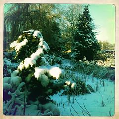 Hipstamatic 18 / 30 (Joe__M) Tags: camera uk winter england snow cold cool december style retro application devon snowfall iphone hipstamatic