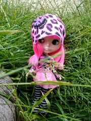 hiding in the long grass