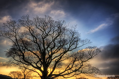 joy spreads with a push (gobayode photography...times) Tags: abstract tree nature skyscape colorsofnature naturecolours
