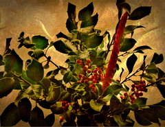 A Berry Happy Christmas (AMoska) Tags: christmas natal candle berries holly textures vela texturas seasonsgreetings bagas azevinho boasfestas