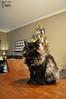 Dimitrix 01 (Untengijutsu) Tags: race cat chat kitty premier pur chaton persan dimitrix