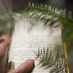 Fir Reading (M4j4) Tags: christmas tree pine reading book branch shadows fingers fir