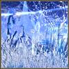 BriLLianT Days (Wakapa) Tags: moonvalley top20blue