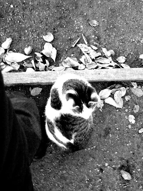 Today's Cat@2010-12-28