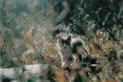 (cheapbungalows) Tags: maana analog 11 gato zenit lz dorada