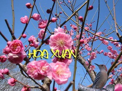 HoaXuan2007