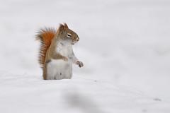 I Sense Nuts DSC_8629
