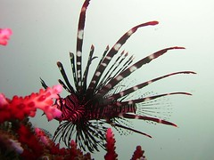 Bali diving Dive Concepts_082