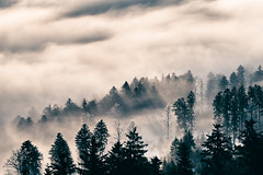 (metallissimus) Tags: trees winter light shadow fog clouds forest landscape licht nebel cloudy foggy wolken rays landschaft wald bume schatten schwarzwald blackforest sonnenstrahlen sunbeams firs tannen wolkig hornisgrinde lichtstrahlen strahlen neblig