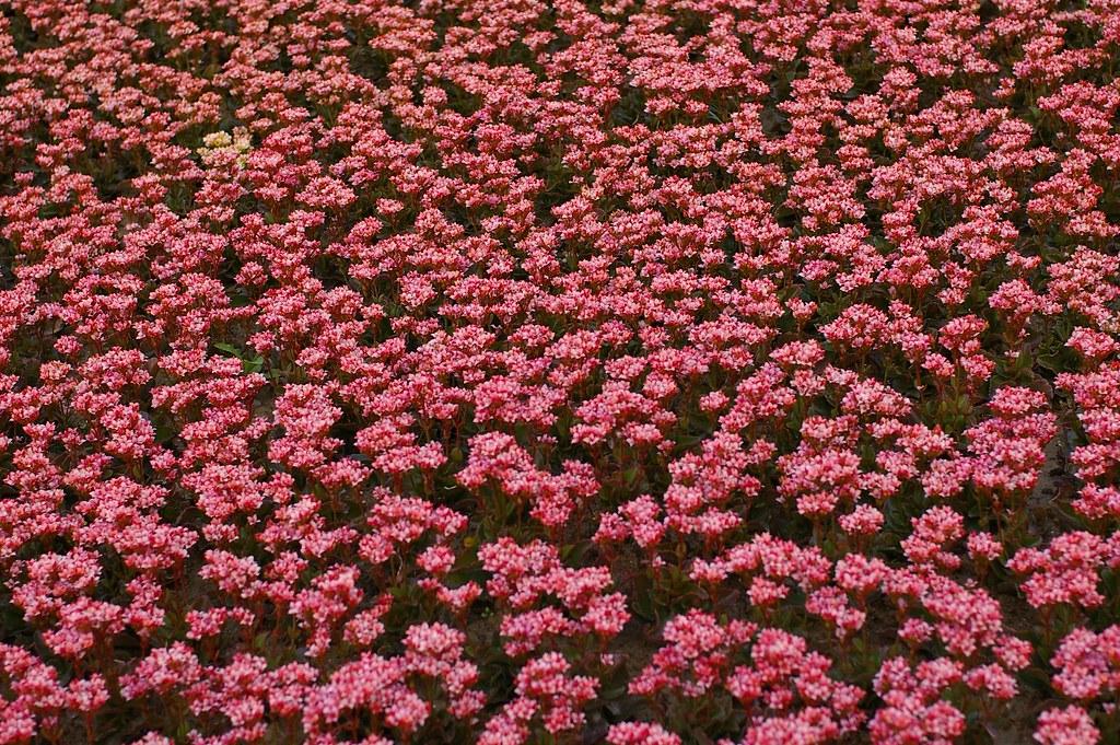 台北花卉博覽會~~初遊