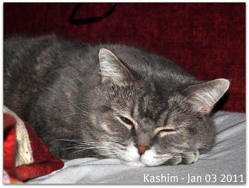 Kashim 2011 01 03