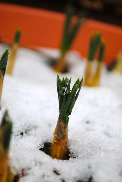 gardening :: Jan 5th 2011