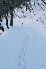 FM2_Planar_Tanigawa_20110105_116 (Jun Takeuchi) Tags: mountain snow film zeiss nikon  fujifilm  fm2 planar   carlzeiss fujicolor filmphotography zf newfm2 fm2n  tanigawadake   160c planar1450 planart50mmf14zf fujicolorpro160c planart1450zf  mounttanigawa  machigasawa