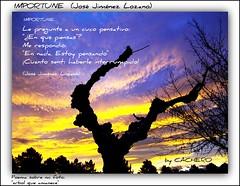 IMPORTUNE ( Jos Jimnez Lozano) (marioadaja) Tags: arbol amanecer poesia cuco amanece poema cachero importune josejimenezlozano lepregunteauncuco
