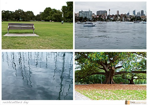 rushcutters bay street photography sydney twoguineapigs pet photography