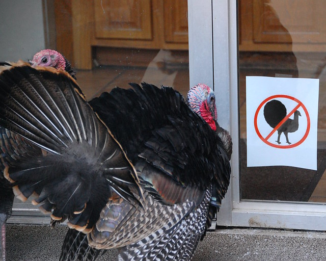 Turkeys Can't Read