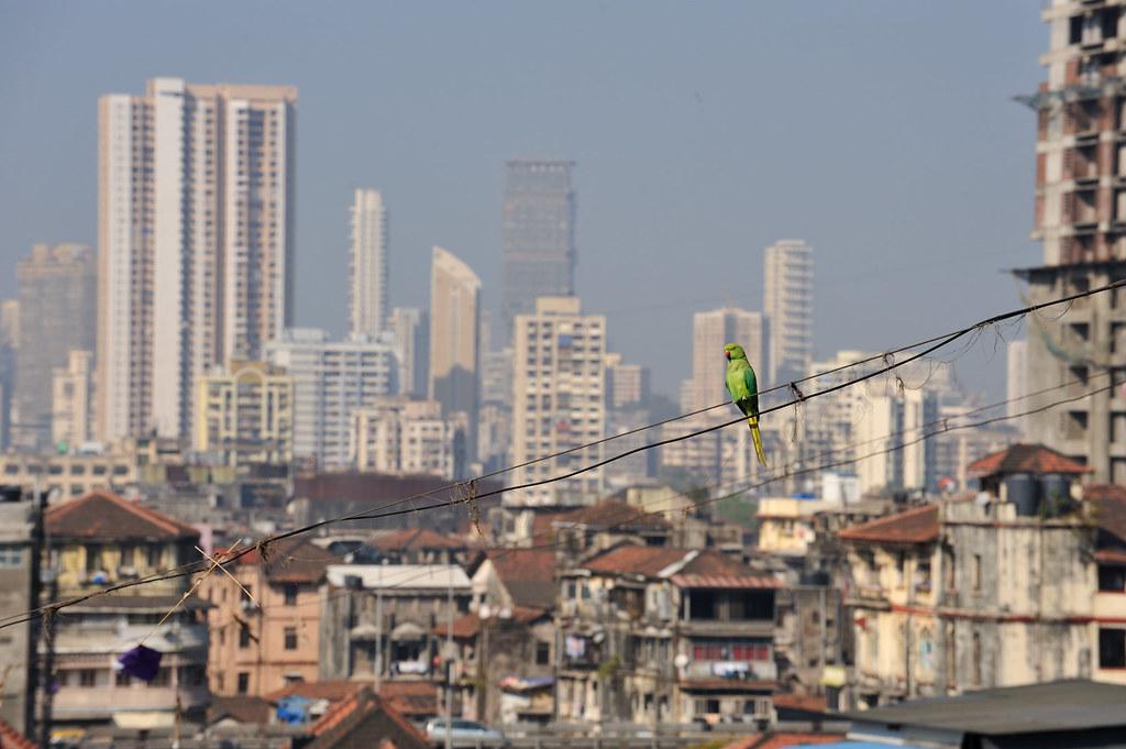 Blog110111-Mumbai-Dec10-2077-EDT
