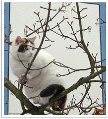 cheeky cat girl Lina
