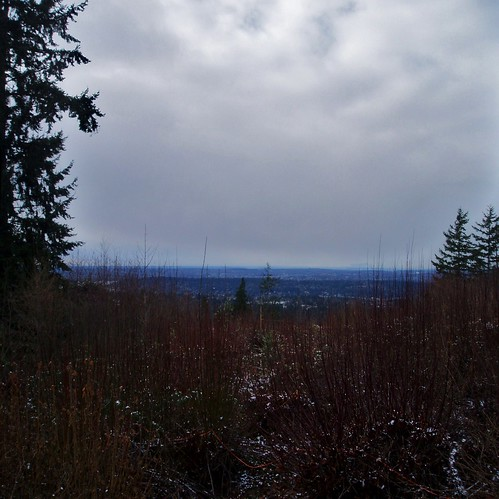 Regional View from Hilltop Community - Bellevue WA
