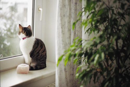 [フリー画像] 動物, 哺乳類, ネコ科, 猫・ネコ, 窓辺, 201101151100