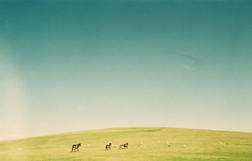 フリー写真素材, 自然・風景, 丘, 草原, 馬・ウマ,