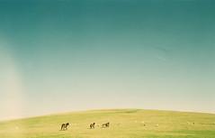 [フリー画像] 自然・風景, 丘, 草原, 馬・ウマ, 201101171300