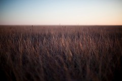 fifty & two thirds: no.3 (colerise) Tags: light nature field grass landscape horizon land