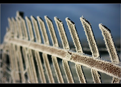 Frosty Fence 2... (Digital Diary........) Tags: fence frost hoarfrost freezing crank chrisconway goodlight billinge fencefriday minus8degrees