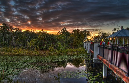 Dusk at the Florida Botanical Gardens