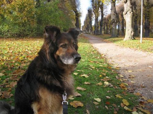 Rufus, november 2010