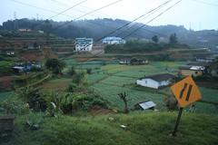 - Nurewa Eliya landscape - (dcem) Tags: srilanka nuwaraeliya serendib ceylan 400d paysagenaturel canonefs1855mm3556