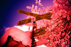 Oberhorst (Markus Moning) Tags: pink blue schnee winter snow film saint sign st analog 35mm schweiz switzerland lomo lca xpro lomography fuji purple cross hiking violet rosa x hike professional direction pro fujifilm tungsten blau process expired gallen processed wandern sankt gall violett wanderweg moning wegweiser hhenweg eggen oberhorst t64 markusmoning wanderwegweiser