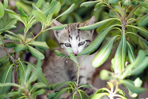 Cat in The Jungle.. +1