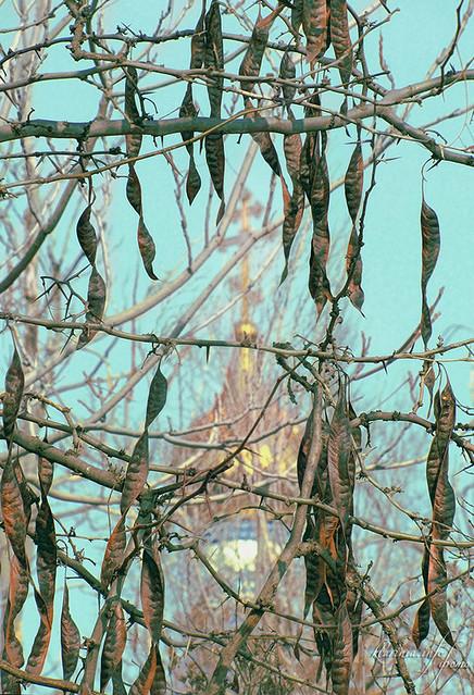 Бабуле, кладбище, купол, церковь, небо, стручки, акация, Боткина