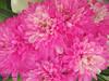 Project [14- 50] (Till Today ,, Maram Al-Harbi) Tags: flower rose canon project flickr 14 50 وردة اليوم ورد حتى فرح فليكر ● اخضر زهر كانون زهره الين فوشي wonderfulworldofflowers بروجكت тιℓℓ тσ∂αу