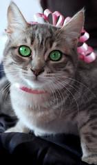 Wants to be a diva (RachBourne) Tags: cat greeneyes ojosverdes gato catportrait goldcruzadas retratogato