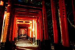 "THE THOUSAND GATES (James Chan ""JC Inspiration"") Tags: world travel inspiration japan james ancient kyoto gate inari trails business fox jc  donation tori shinto tasha hdr kitsune 2010  fushimi torigate fushimiinaritaisha  godofrice jameschan  jcinspiration"