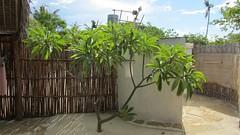 Mozambique-2215