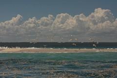 Mozambique-4429