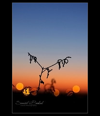 Sunset Bokeh (Faisal | Photography) Tags: city sunset silhouette canon eos bokeh l usm f28 ef 2470mm canonef2470mmf28l 50d canoneos50d faisal|photography فيصلالعلي