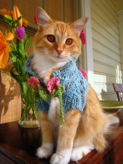 IMG_6742 (eachen731) Tags: blue favorite orange beautiful cat mississippi easter marthas sweater handmade beth knit kitty henderson laurel shrug paddleball catmoments teencis catshrug