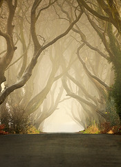 The Dark Hedges (2011) - Klarens