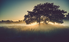 Tales of a tree - part 4 (Ingeborg Ruyken) Tags: 2016 500pxs drunenseduinen loonseendrunenseduinen dawn dropbox flickr morning natuurfotografie ochtend september summer zomer zonsopkomst