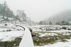 IMG_9287 (Albert-Ang) Tags: cradle mountain tasmania snow spring winter snowy park dove lake