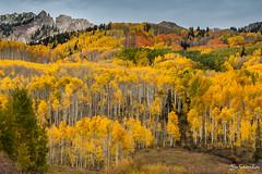 Kelber Pass - Colorado (FollowingNature (Yao Liu)) Tags: kelberpass colorado fallcolors followingnature highway12 orange yellow aspen coloradofallcolors coloradofallfoliage nikonfallco