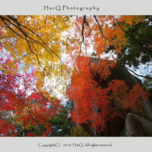 Deep autumn, colorful, nature is wonderful.
